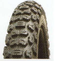 Motorcycle Trail Tyres Tires Tubes